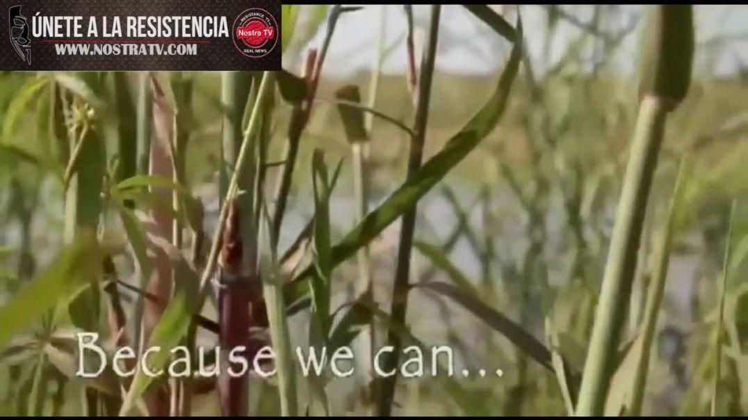 Cruz Roja quiere ocultar este vídeo _  MMS cura la(720P_HD)