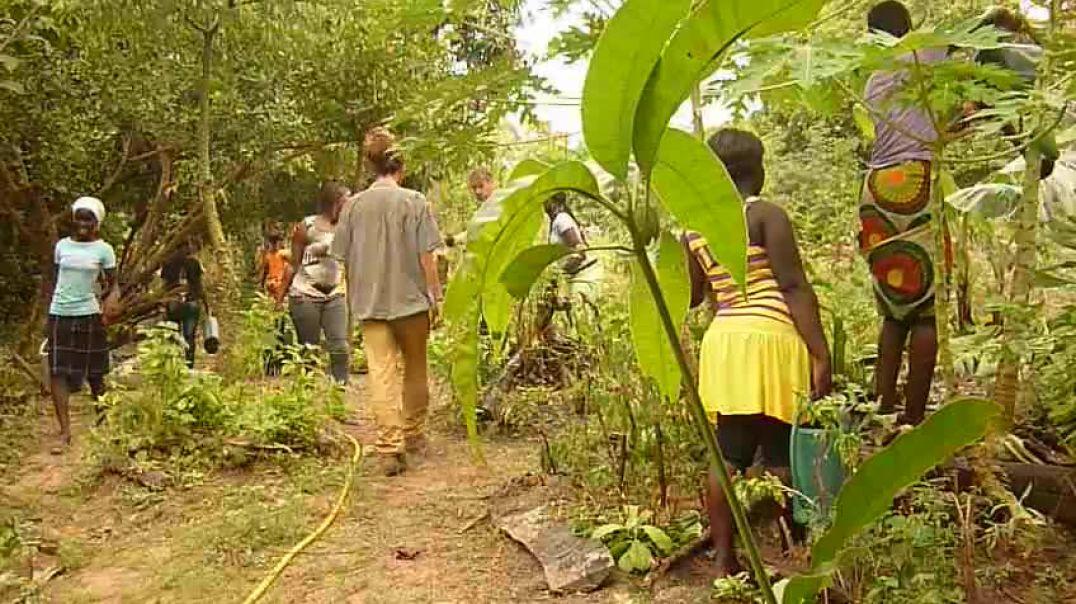 Cursos de Botánica medicinal Kafountine Art Oasis