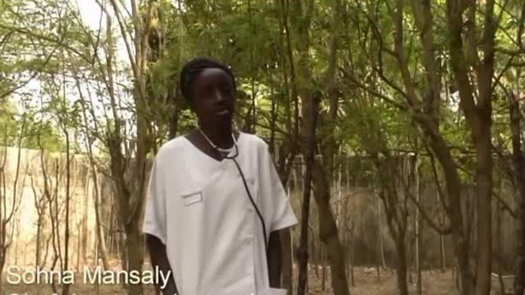 Moringa Oleifera Francois Vion   Art Oasis Kafountine (Francés)