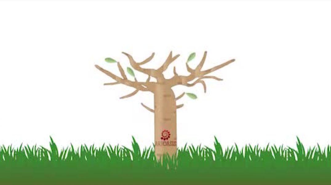 Art Oasis Baobab