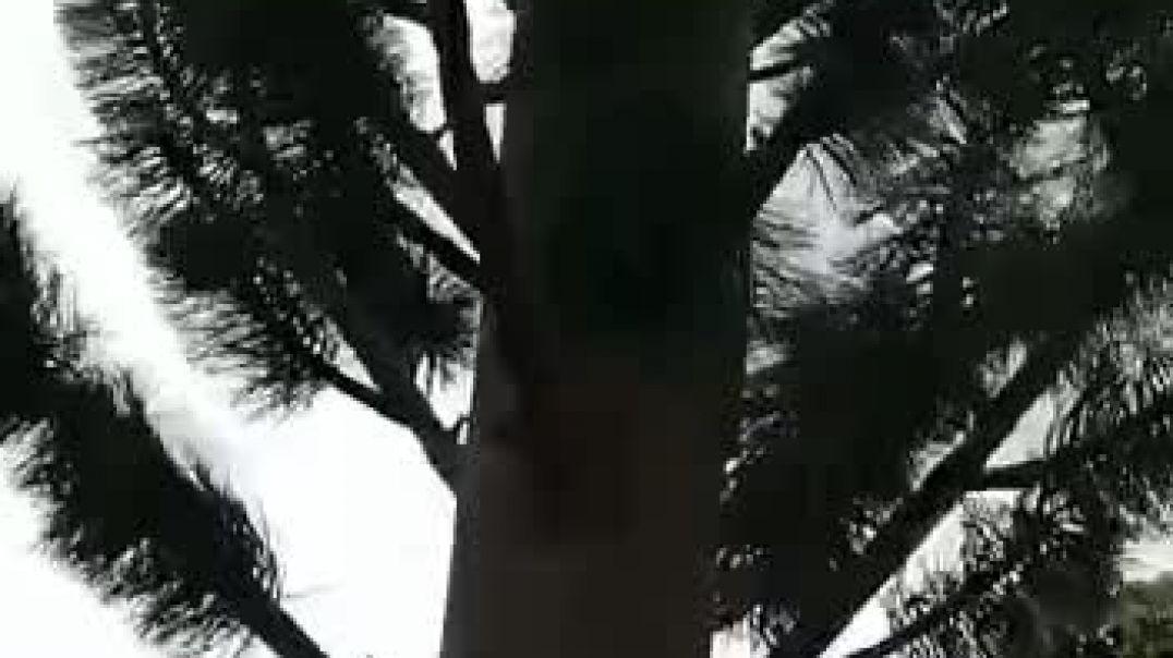 Antena 5g camuflada como un árbol