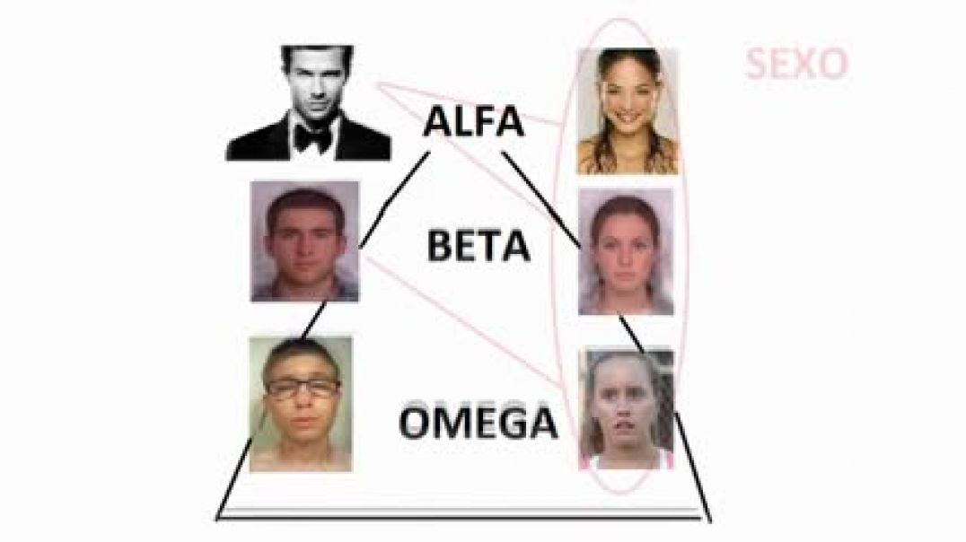 invazor33 mgtow la jerarquia social del hombre ley del 20 % alfa beta omega proveedor