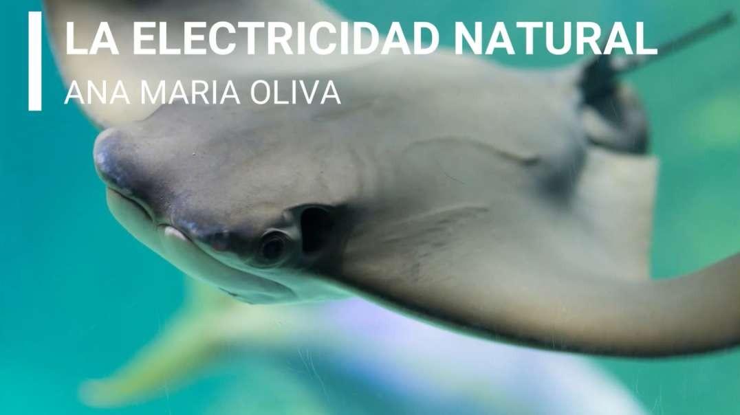 ELECTRICIDAD NATURAL - P3