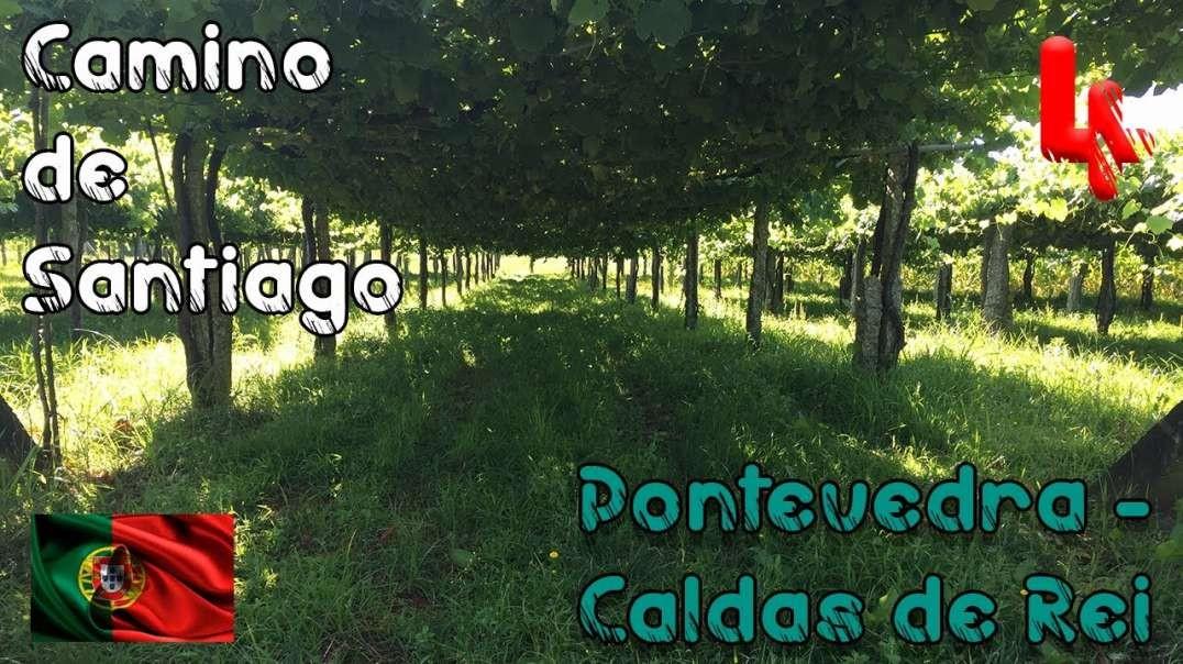 Cuarta etapa del Camino de Santiago Portugués - 2018