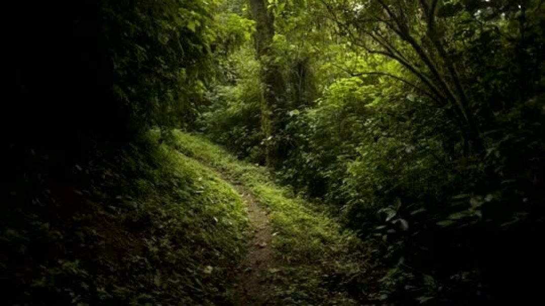 El bosque del Triunfo - El hogar del Quetzal.