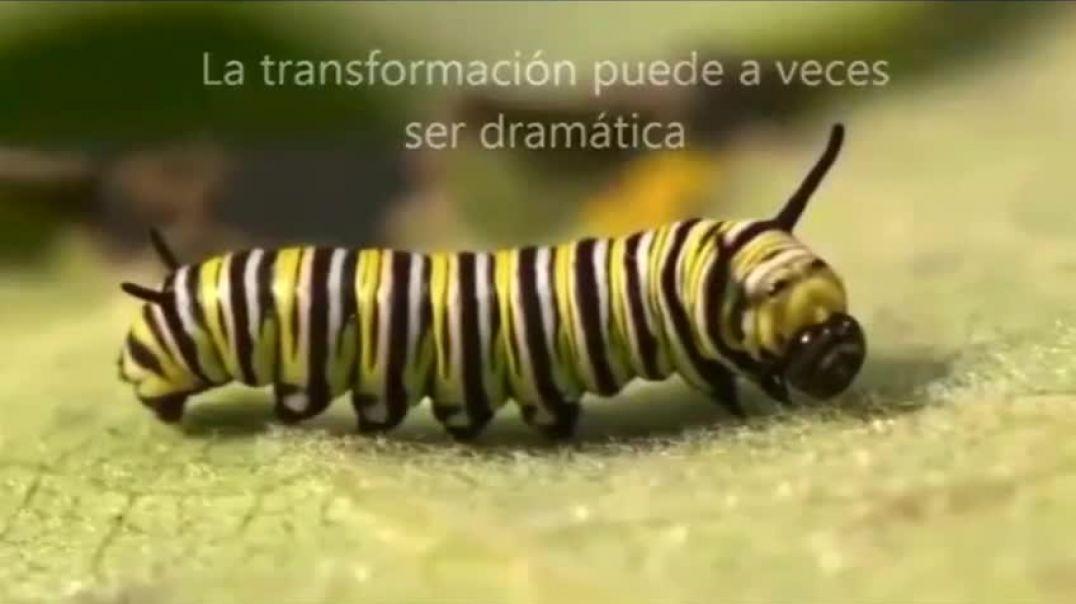 Estas preparado para tu Metamorfosis?? No tengas Miedo! ADELANTE!! Video de Fabiana Volfezon. Mica L