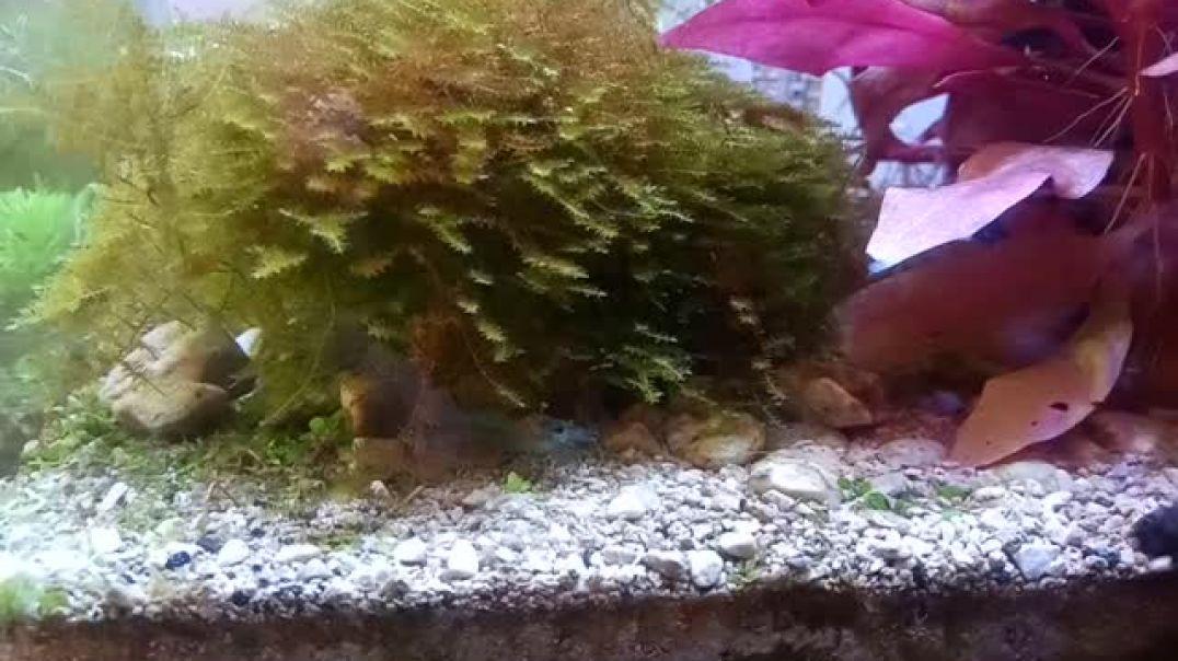 Micro acuario con gambitas