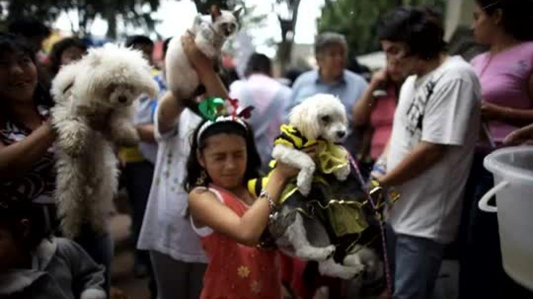 La bendicion de  los Animales en Oaxaca.