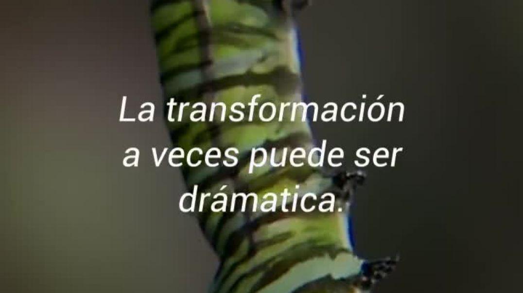 Transición hacia una nueva humanidad. Metáfora: de oruga a mariposa.