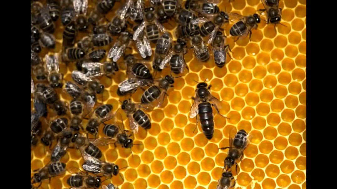 La abeja reina. El secreto de la eterna juventud.