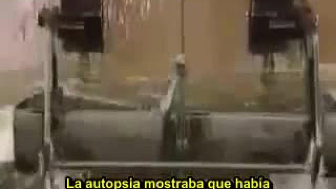Marc Dutroux  Los testigos muertos (red de pedofilia de altas esferas) Subtitulado ESP