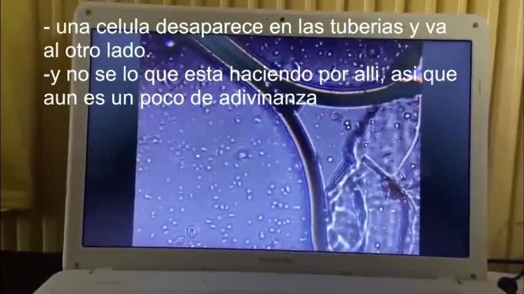 La vacuna Pfizer al microscopio.