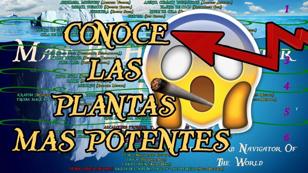 EL ICEBERG DE LAS PLANTAS MAGICAS