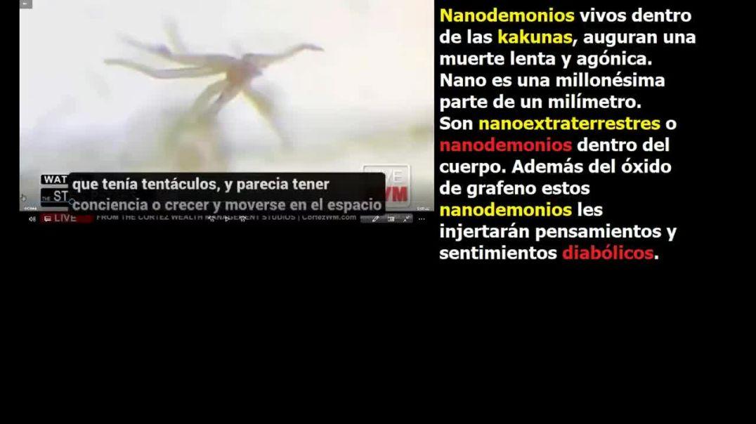 Nanodemonios vivos dentro de las kakunas
